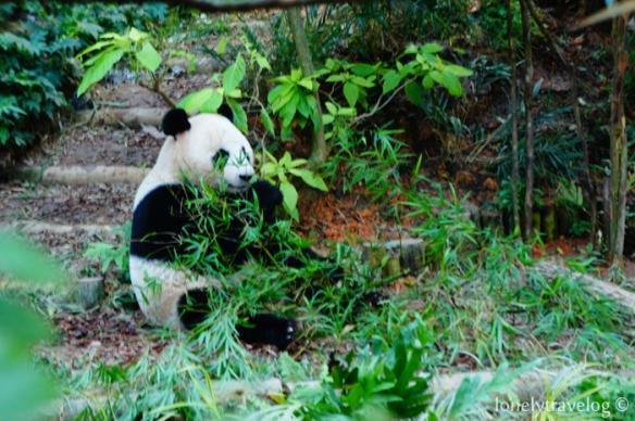 Panda Munch