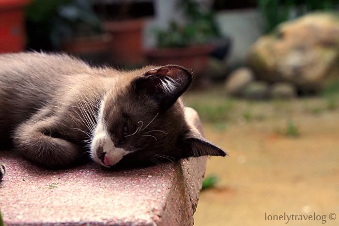 Home - Cat