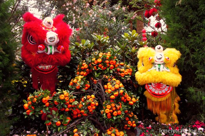 Lions: Spring Celebrations