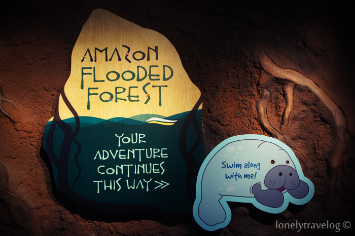 Amazon Flooded Forest