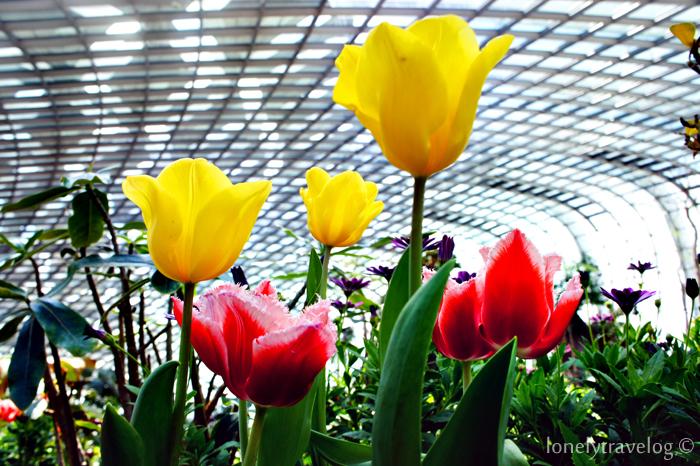 Tulipm