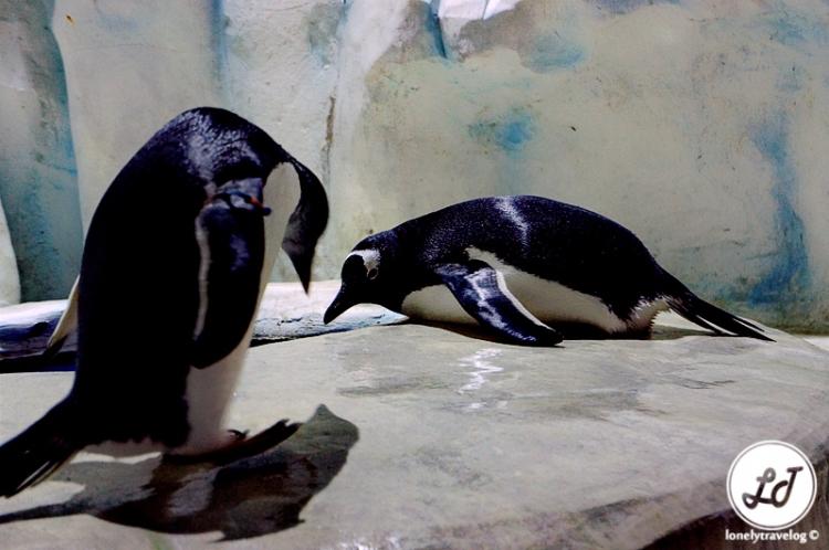 Ocean Park - Penguin