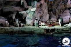 Ocean Park Penguin