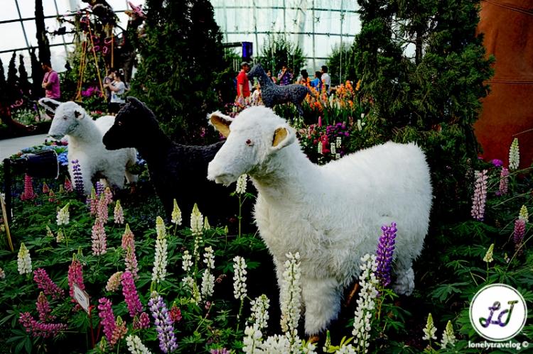 Nursery Rhymes - Sheep