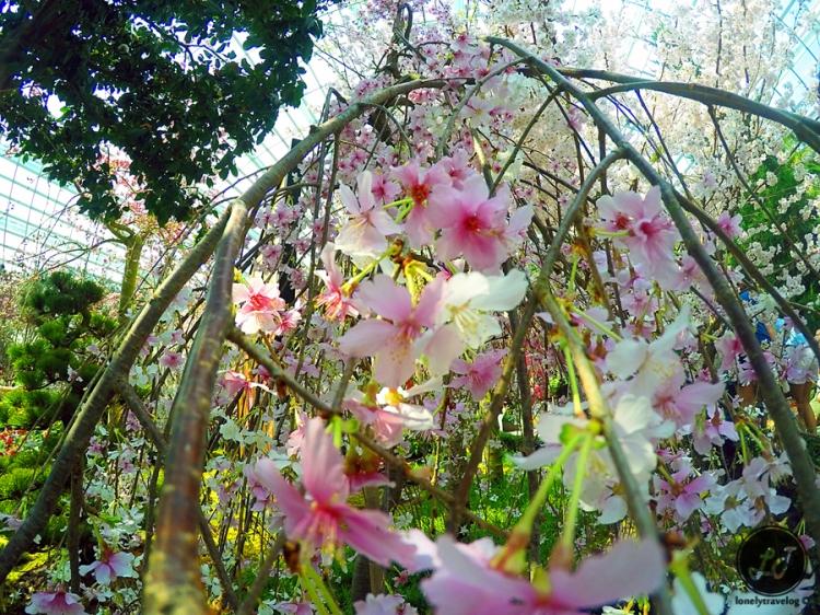 Blossom Beats