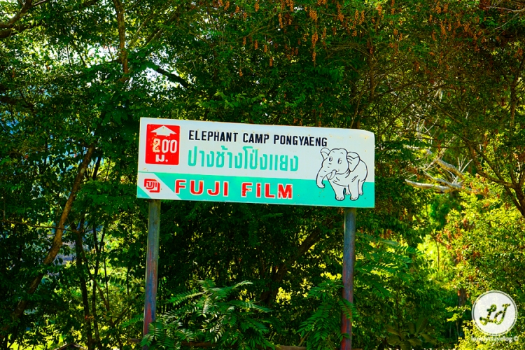 Elephant Camp Pongyaeng