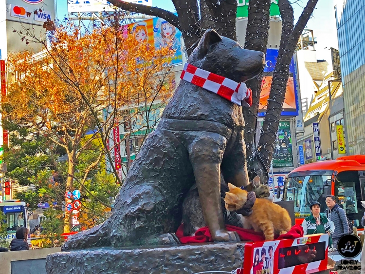beloved Hachiko