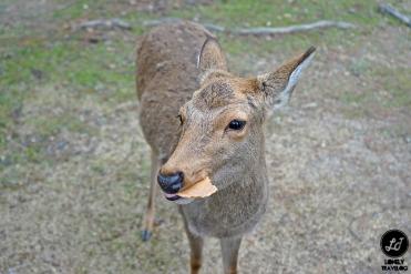 Nara ,Japan