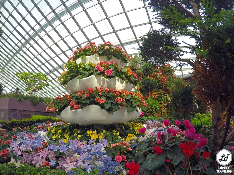 Begonia Brilliance
