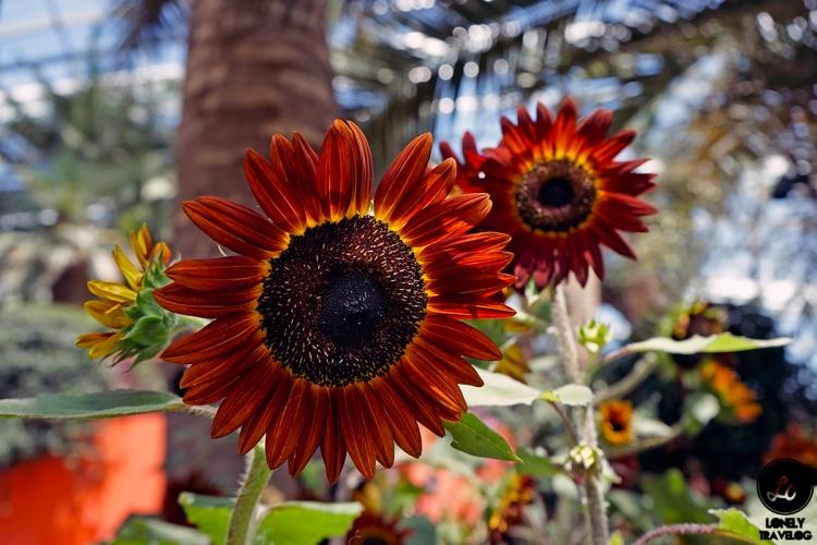 Sunflower Surprise (6)