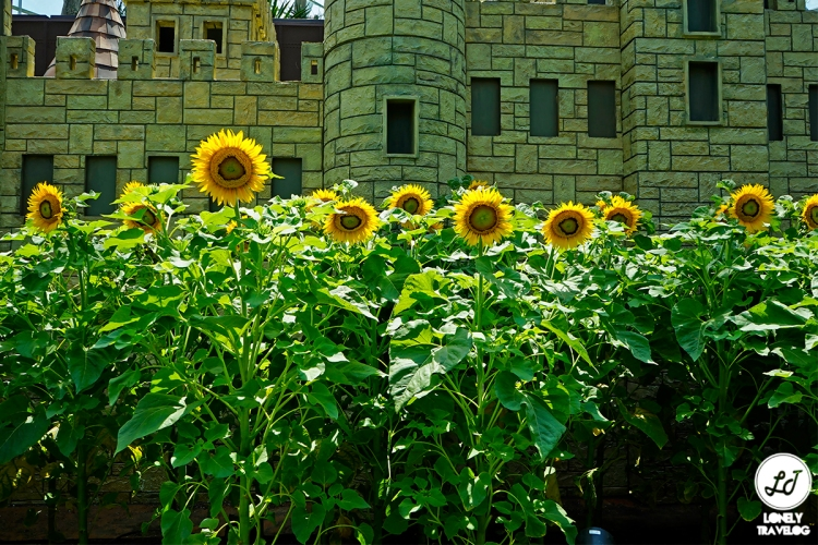Sunflower Surprise (8)