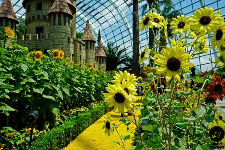 Sunflower Surprise (9)