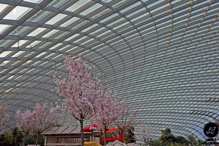 Sakura Matsuri 2019 (2)