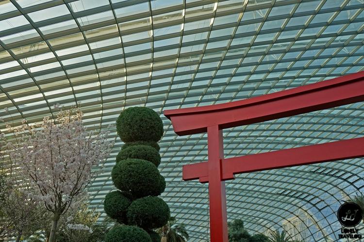 Sakura Matsuri 2019 (4)