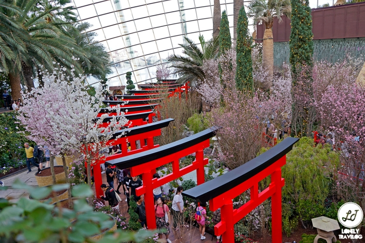 Sakura Matsuri 2019 (6)