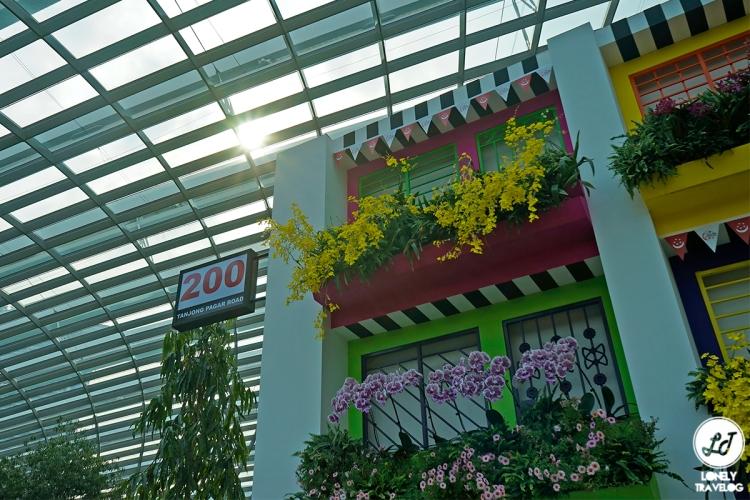 Orchid Extravaganza 2019 (1)