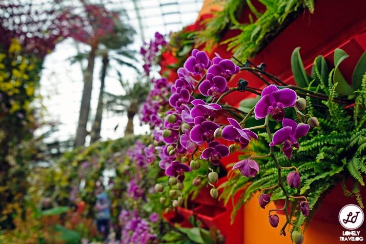 Orchid Extravaganza 2019 (4)