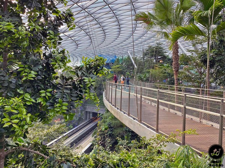Jewel Canopy Walk (2)