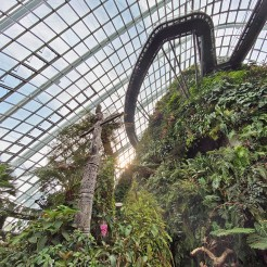 Cloud Forest 20 (7)